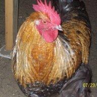 Barty chicken