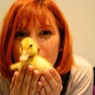 duckcrazed