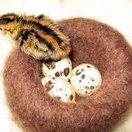 QUAIL MOTHER