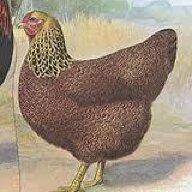 chickenmax