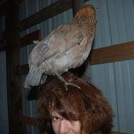 flockmomma