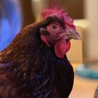 chickentenders