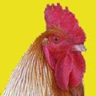 cluck13
