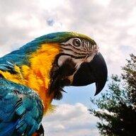 parrotmama