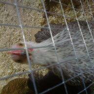 Hedgehog1980