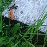 Naked Newt Farm