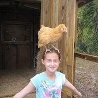 chickenonmyhead
