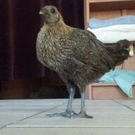 Chicken mundoo