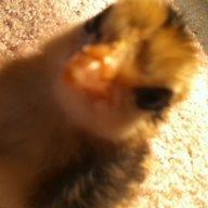 cluck n stuff