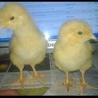 Zen Chicken