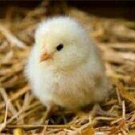 chickygirlrocks