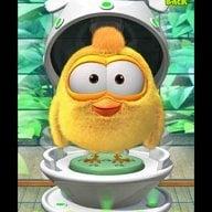 chickchickhere