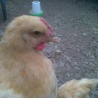 rooster1119