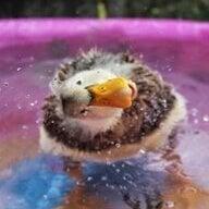 duckchix