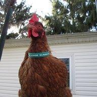 ChickenHam