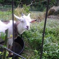 Dixiana Farms