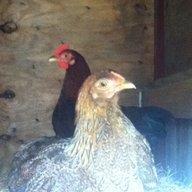 chickenlover221