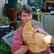 poultrypowerof4