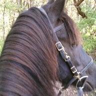 Horseyrider