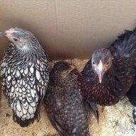 chicklover59