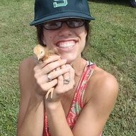 Marks Chicks