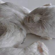 featherbro123