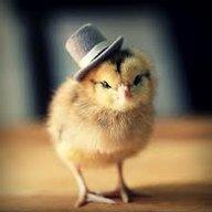 ChickenDrama14