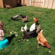 milldew chicks