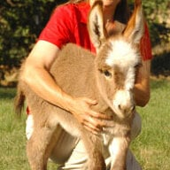donkeydiva