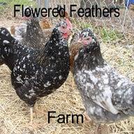 TxFlowers