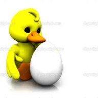 duckncluck