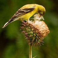 birdgirl9