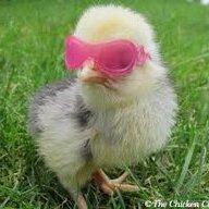 chickenloverand