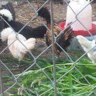 Hennies r us