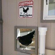 Falcon Chickens