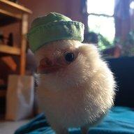 chickenlover235