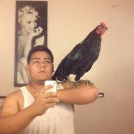 gangsta rooster