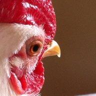 ChickenCyril