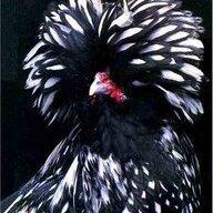 ChickenWorlds