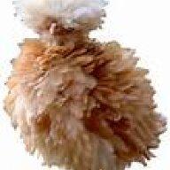 chickenlover432