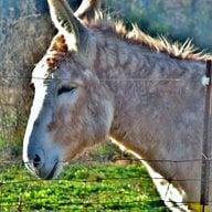 donkeydew2farms