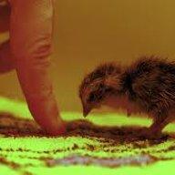 quailhaven