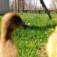 Mother Goosey