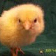 chickenvirgin