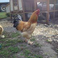 Farm377