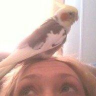 birdldy9