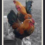 ChickenDaddy26
