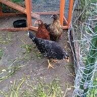 ChickMagnet89