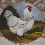 laceychicken
