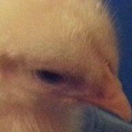 Bayou Chick